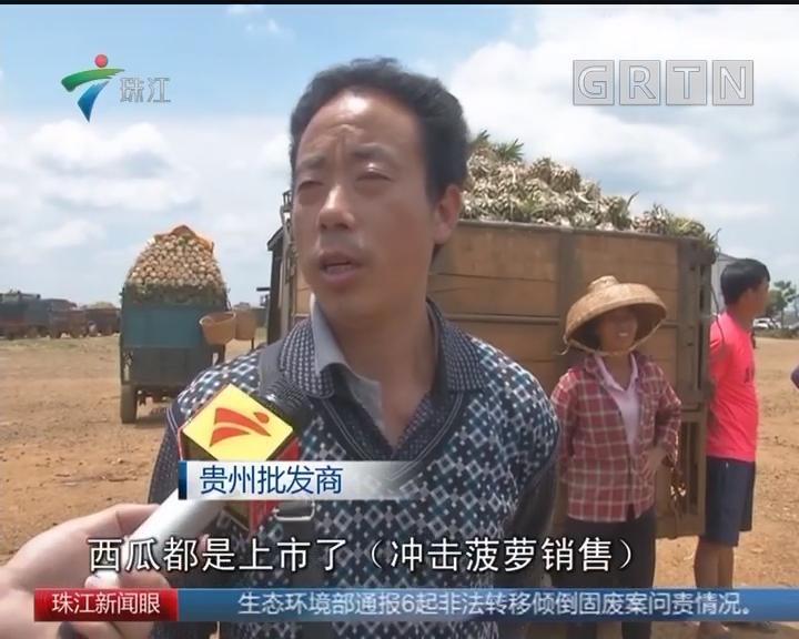 """湛江徐闻:菠萝遇价格""""寒冬"""""""