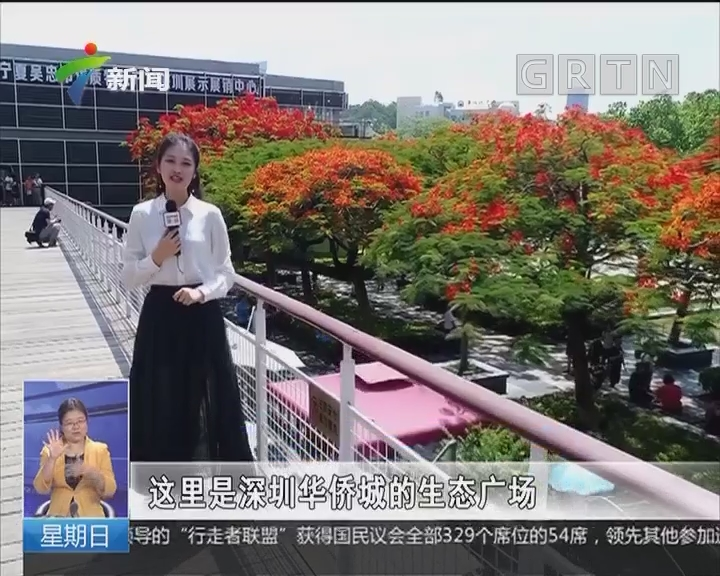 深圳:五月天凤凰花开成景观