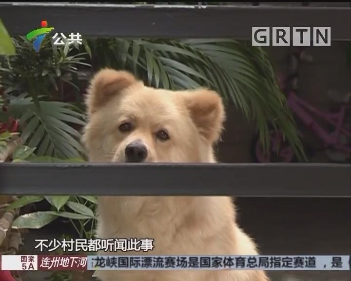 """广州:男子自拍""""虐狗""""视频 引街坊们热议"""