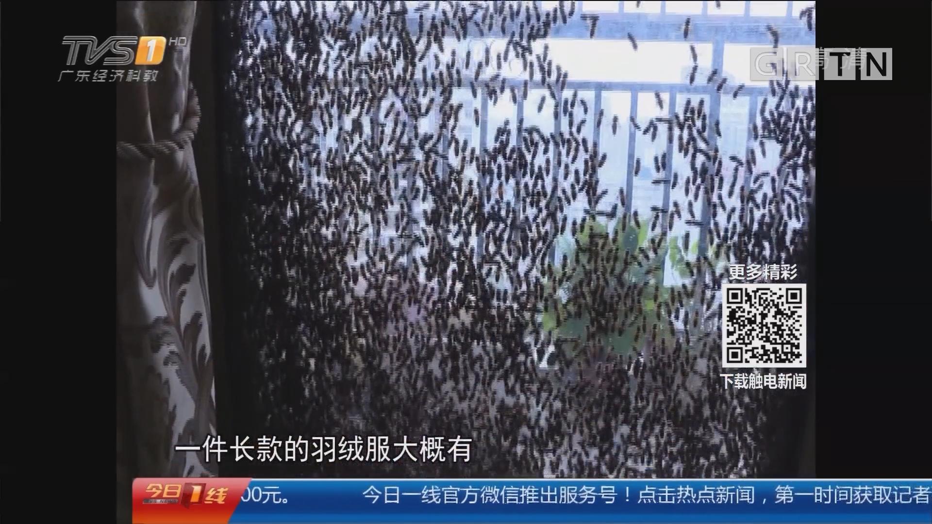"""广西南宁:家里来了上万只蜜蜂""""攻陷""""阳台"""