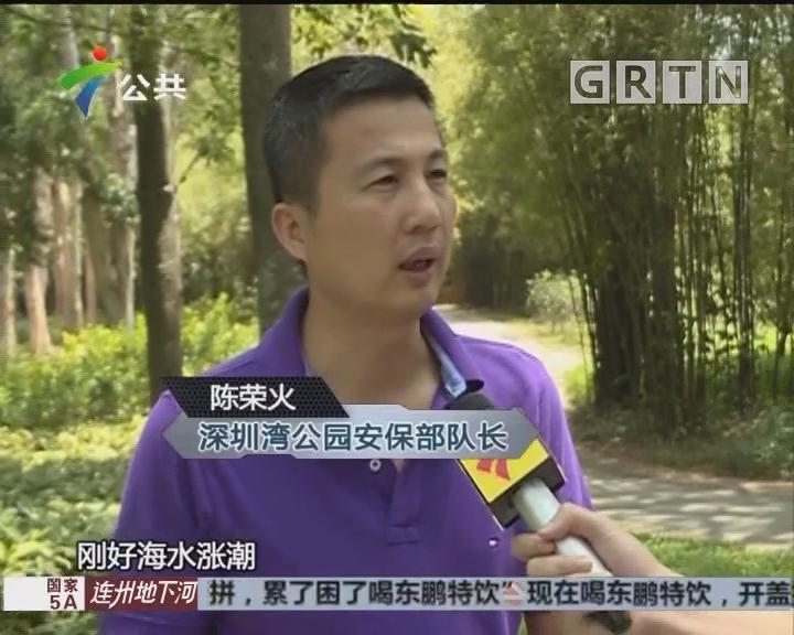 深圳湾公园现蟒蛇 疑因滩涂觅食被困