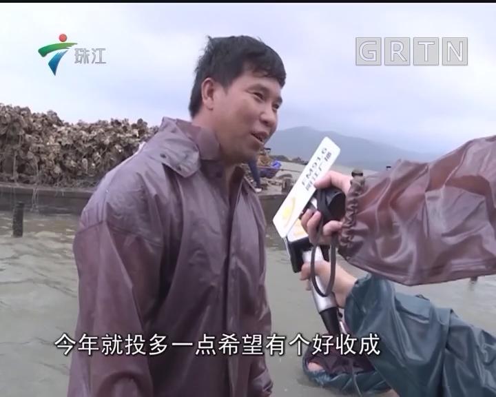 阳西程村:雨天好时机蚝农投苗忙