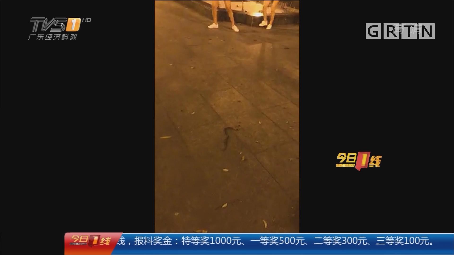 """东莞长安:散步偶遇""""贪食蛇"""" 蛇蛙大战吓坏街坊"""