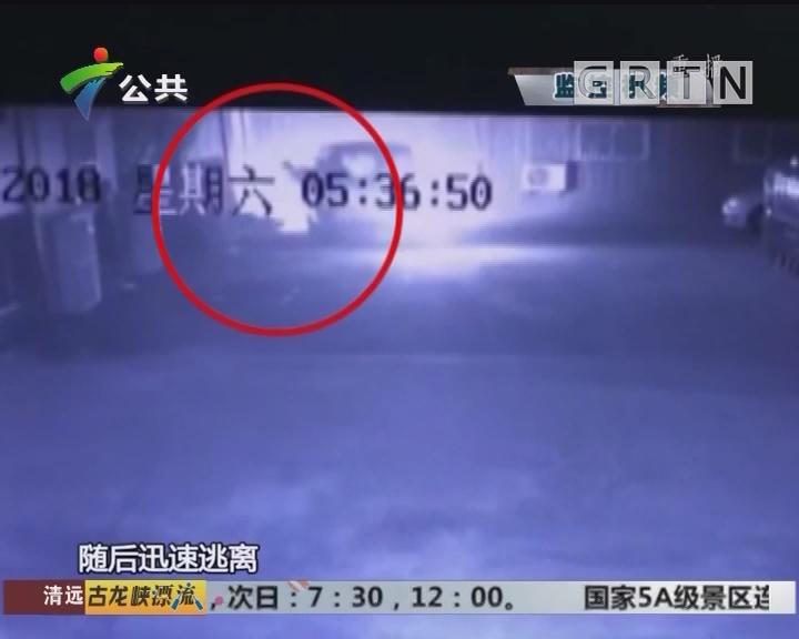 深圳:男子开面包车偷狗 钢索套狗脖3秒得手