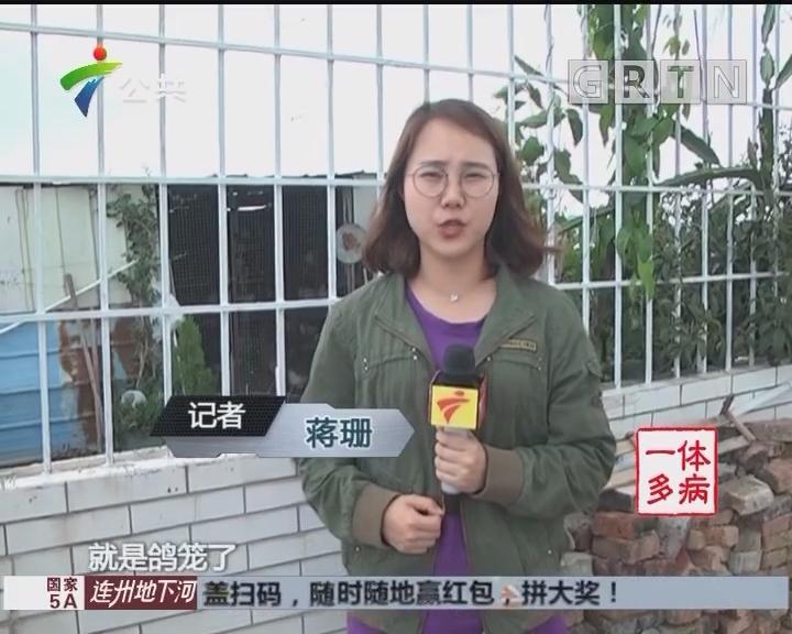 街坊求助:业主阳台养鸽 恶臭难闻