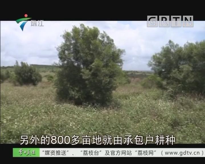 徐闻:900亩土地丢荒5年为哪般?