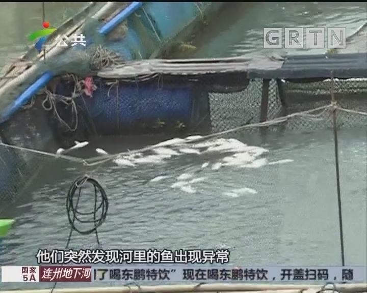 南沙:万斤排鱼离奇死亡 相关部门已取样调查