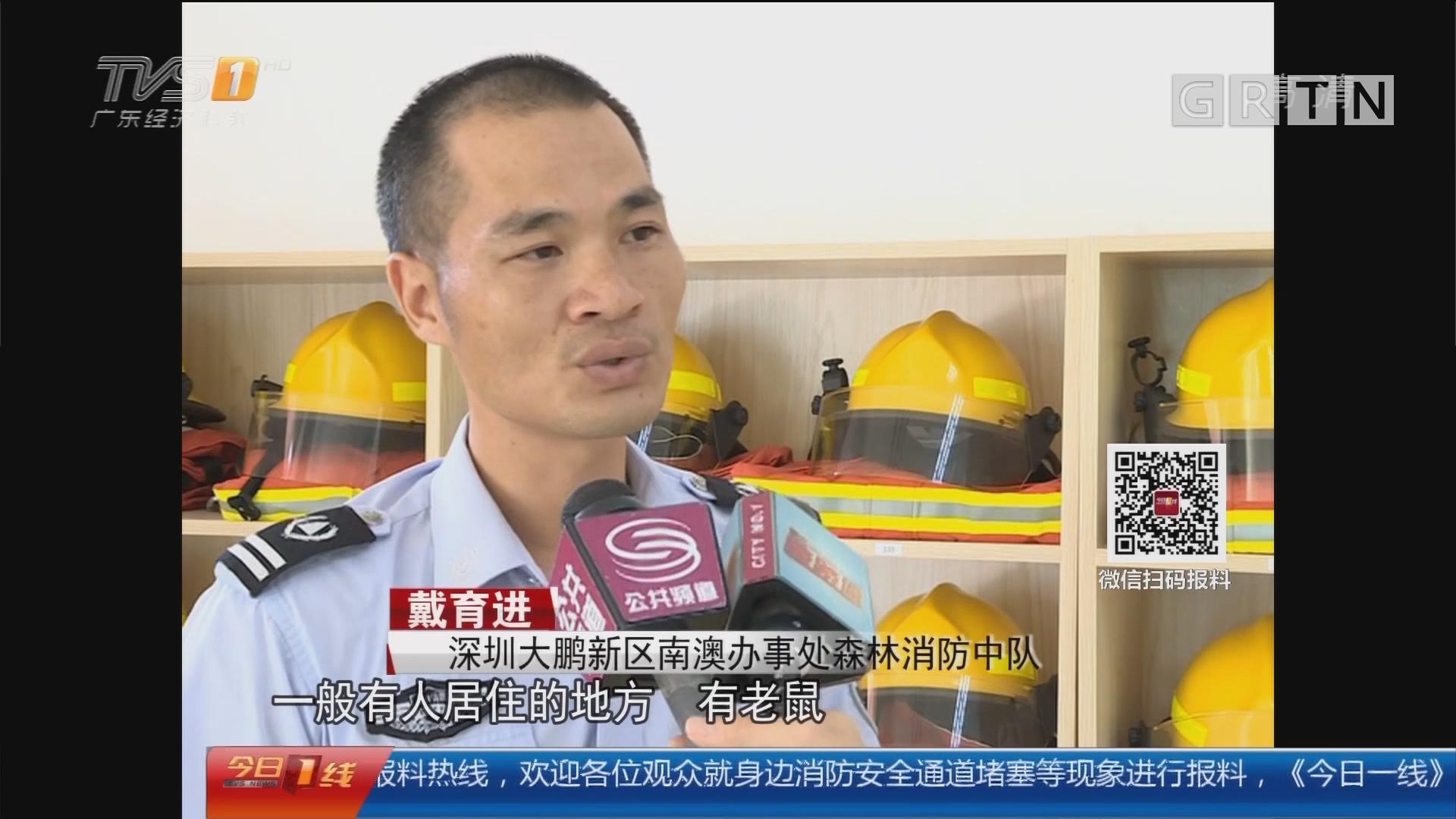 深圳大鹏新区:蟒蛇下山觅食闯小区 消防紧急处置
