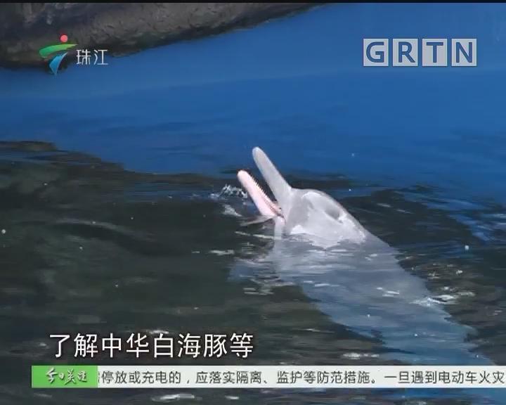 """今起中华白海豚确立了""""保护宣传日"""""""
