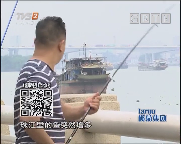珠江离奇多鱼为哪般