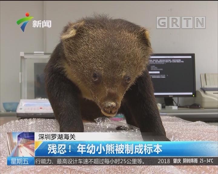 深圳罗湖海关:残忍!年幼小熊被制成标本