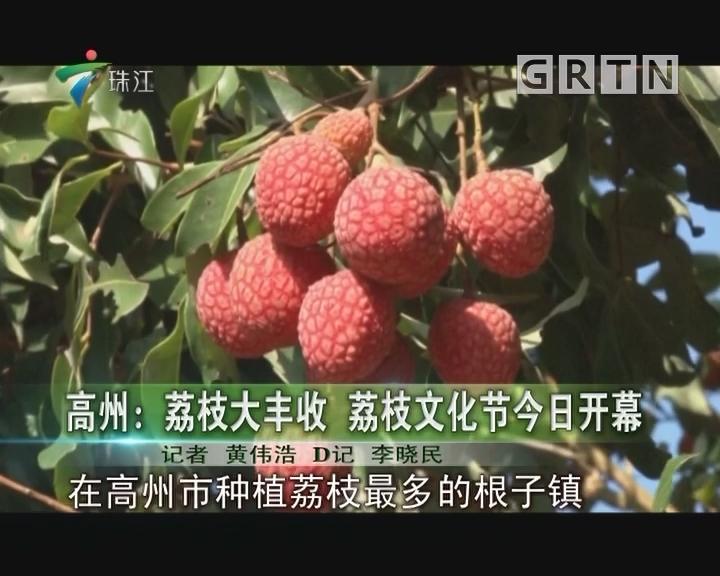 高州:荔枝大丰收 荔枝文化节今日开幕