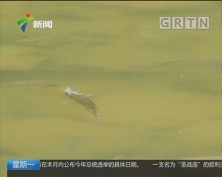 """深圳:今年治理水污染""""攻坚战""""再度升级"""