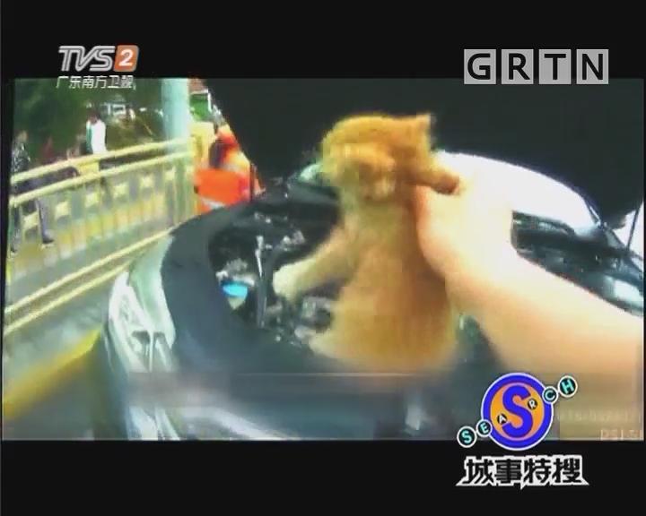 小猫钻车底 愁煞五个大男人