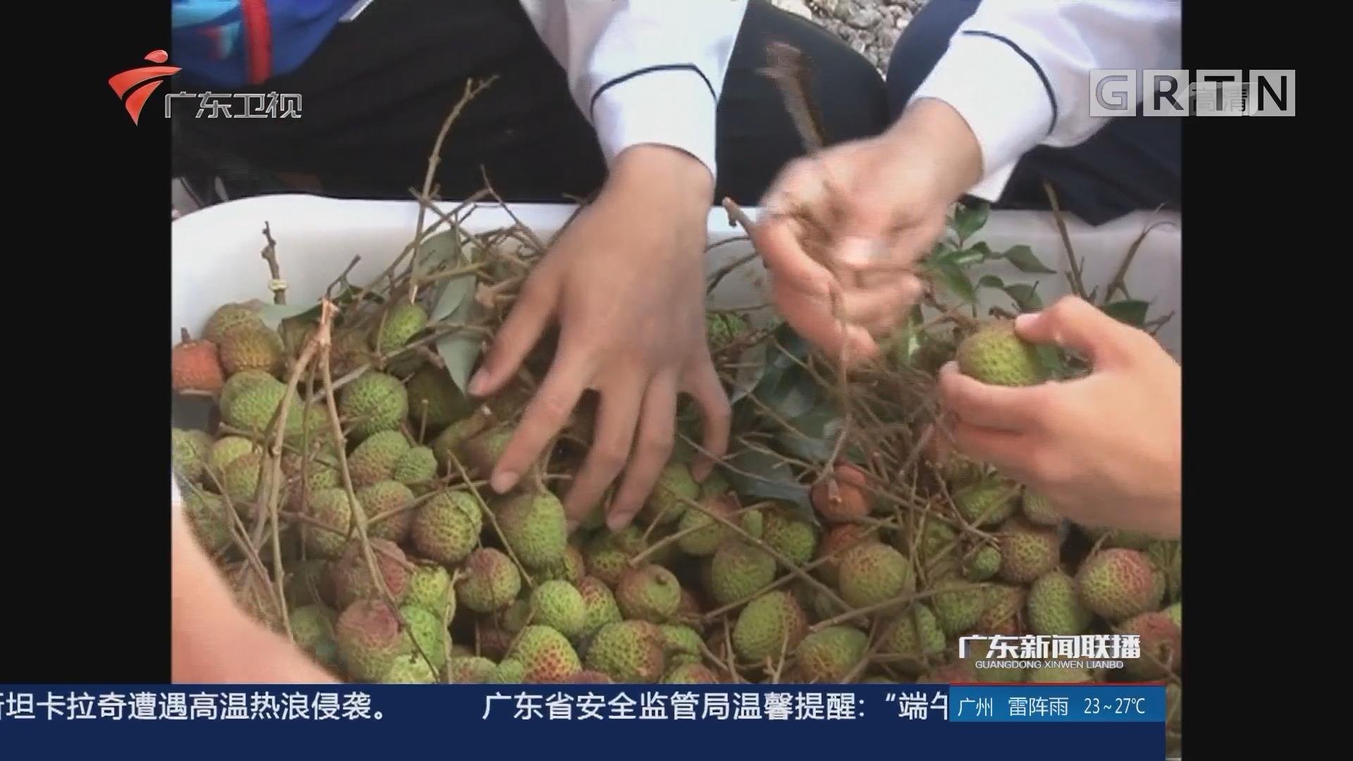 广东:今年荔枝喜迎丰年 种植农户增产增收