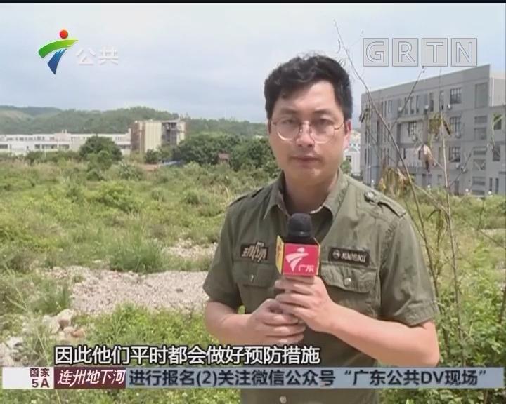 深圳:草地出现大蟒蛇 消防队员将其抓获