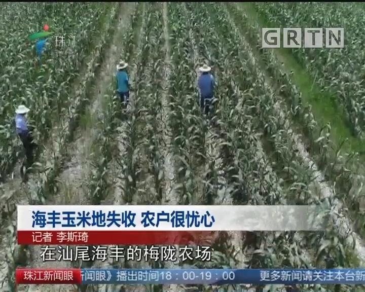 海丰玉米地失收 农户很忧心