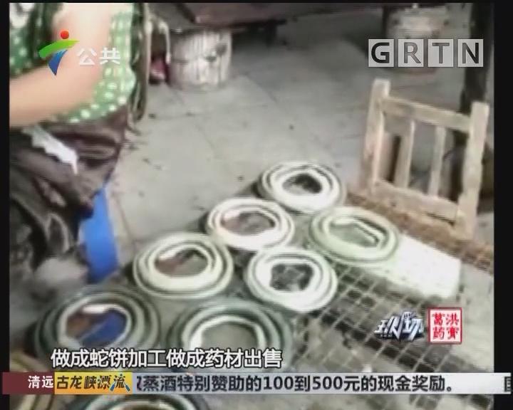 横荷新屋村有多个死蛇加工作坊 现场很恶心