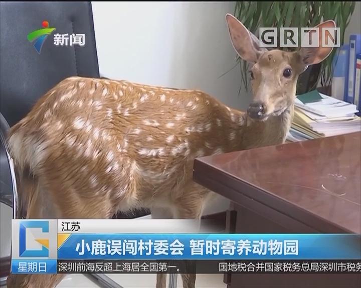 江苏:小鹿误闯村委会 暂时寄养动物园