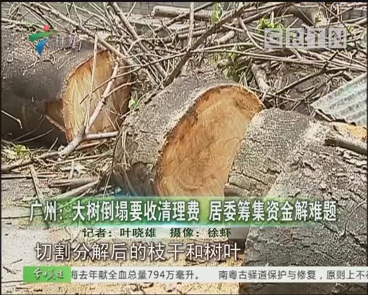 广州:大树倒塌要收清理费 居委筹集资金解难题
