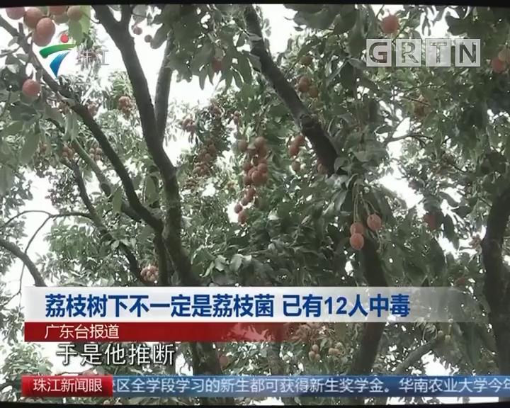 荔枝树下不一定是荔枝菌 已有12人中毒