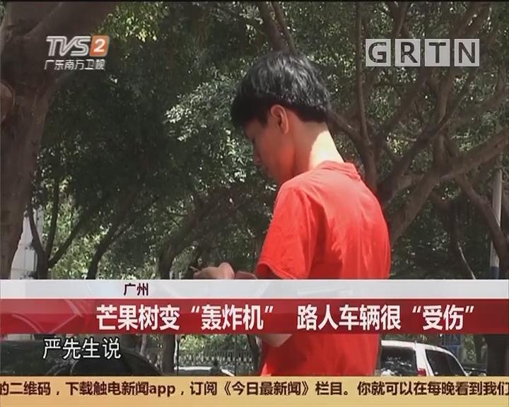 """广州:芒果树变""""轰炸机"""" 路人车辆很""""受伤"""""""