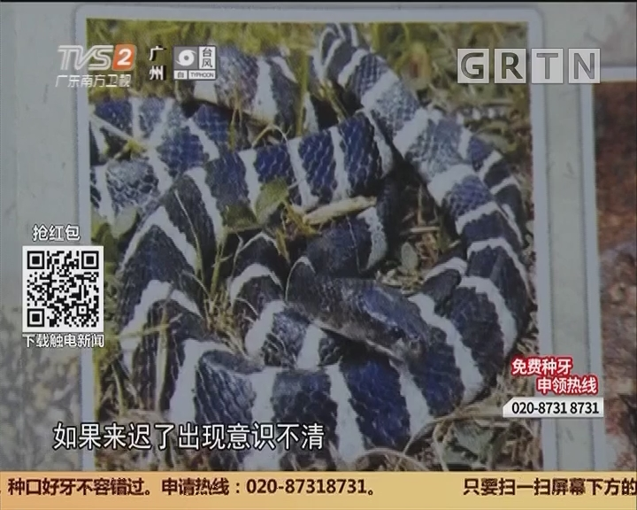 广州花都:清理后院误抓银环蛇 大叔被咬昏迷