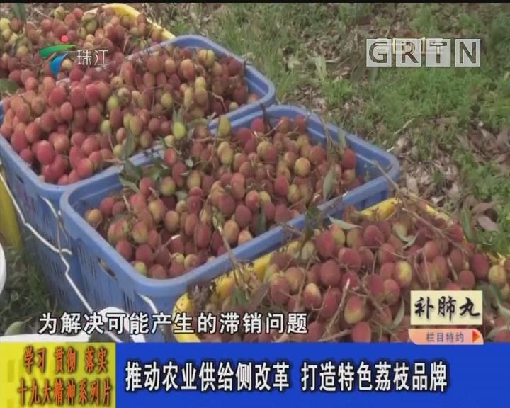 推动农业供给侧改革 打造特色荔枝品牌