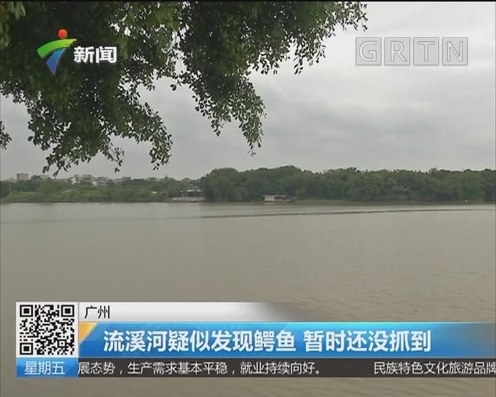 广州:流溪河疑似发现鳄鱼 暂时还没抓到