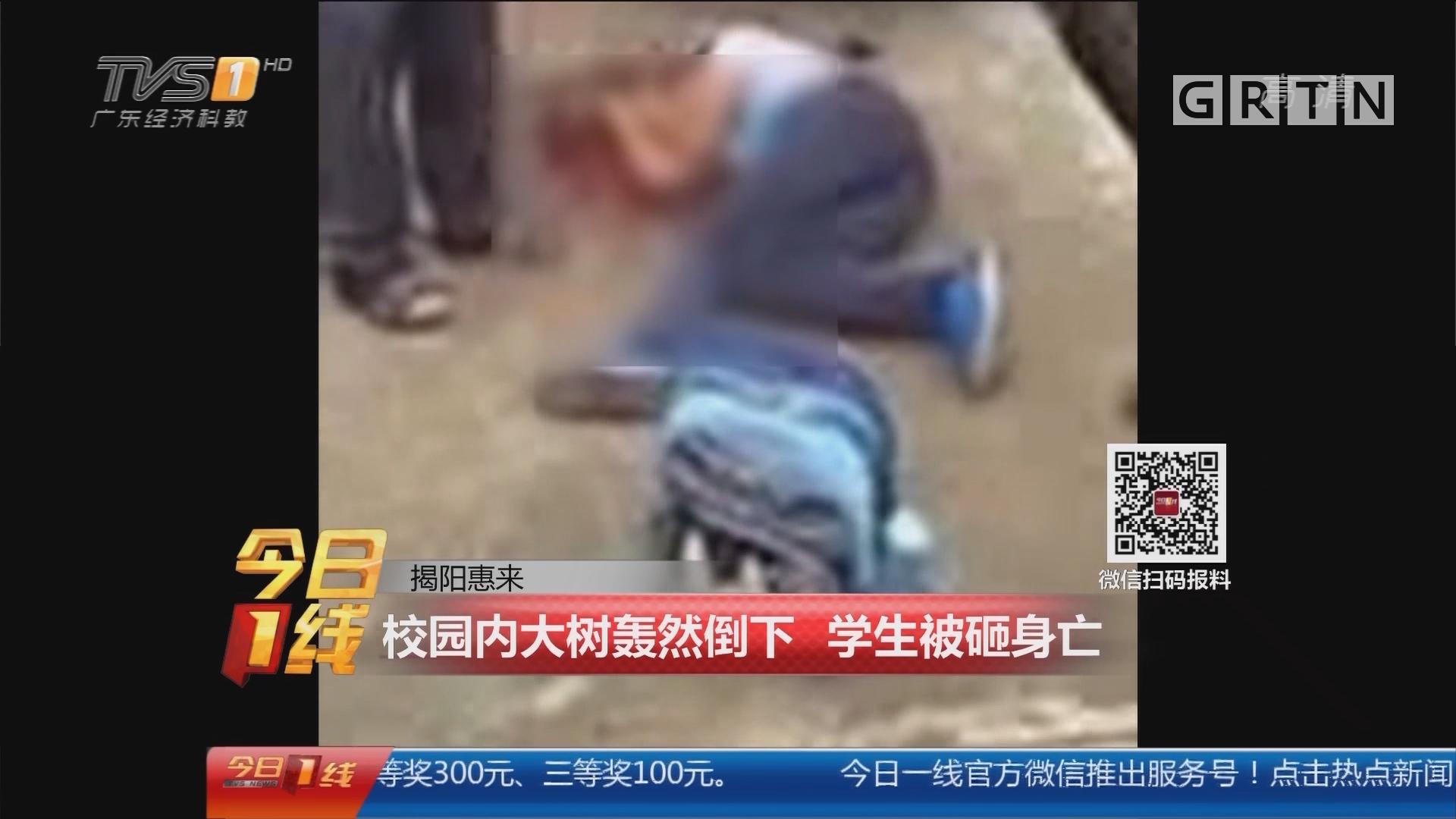 揭阳惠来:校园内大树轰然倒下 学生被砸身亡