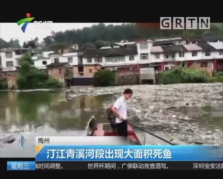 梅州:汀江清溪河段出现大面积死鱼