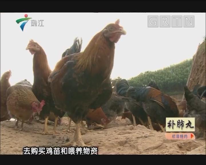 [2018-06-04]摇钱树:探秘正宗清远鸡