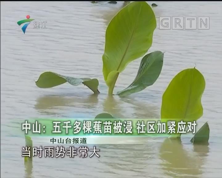 中山:五千多棵蕉苗被浸 社区加紧应对