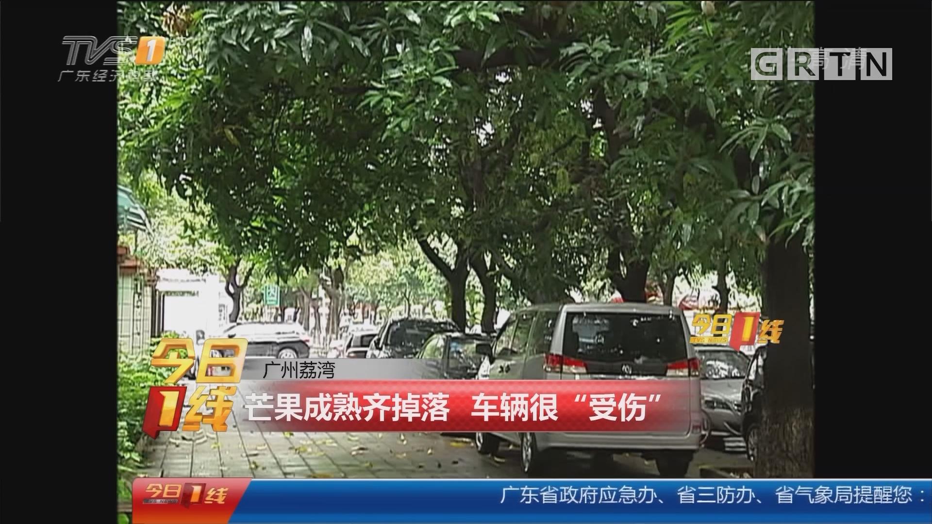 """广州荔湾:芒果成熟齐掉落 车辆很""""受伤"""""""