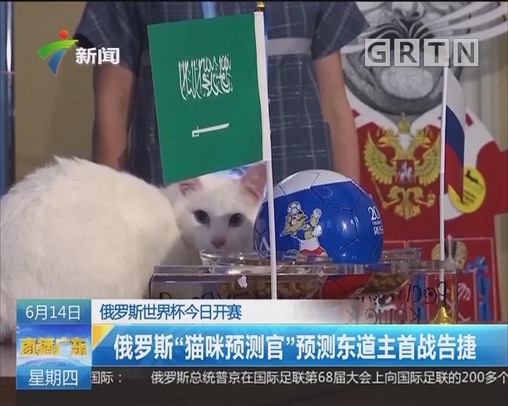 """俄罗斯世界杯今日开赛:俄罗斯""""猫咪预测官""""预测东道主首战告捷"""