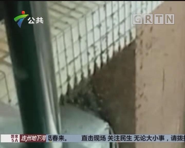 珠海:蜜蜂大军前来报到 居民关窗抵挡