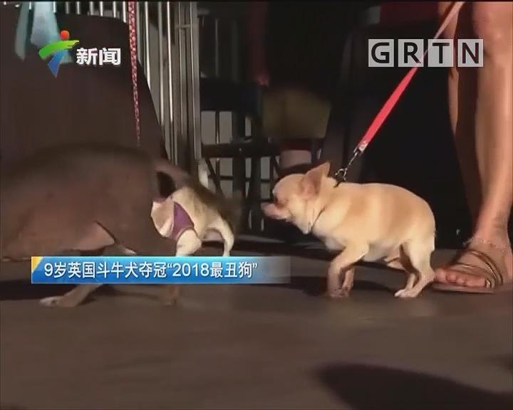 """9岁英国斗牛犬夺冠""""2018最丑狗"""""""
