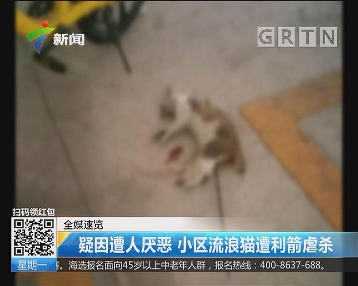 疑因遭人厌恶 小区流浪猫遭利箭虐杀