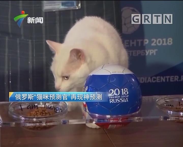 """俄罗斯""""猫咪预测官""""再现神预测"""