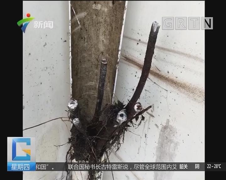 """东莞:小区下水管道惊现""""蟒蛇"""""""