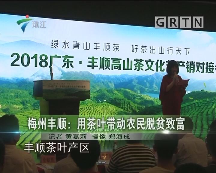 梅州丰顺:用茶叶带动农民脱贫致富