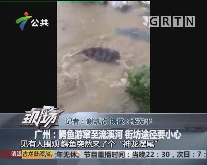 广州:鳄鱼游窜至流溪河 街坊途径要小心
