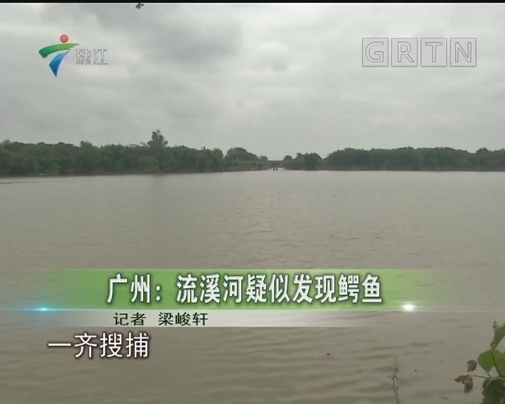 广州:流溪河疑似发现鳄鱼