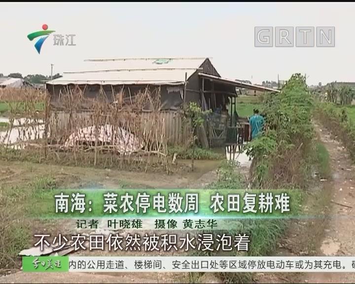 南海:菜农停电数周 农田复耕难