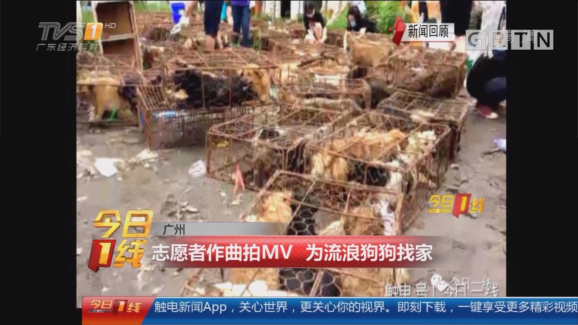 广州:志愿者作曲拍MV 为流浪狗狗找家