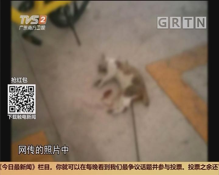 中山:小区流浪猫遭虐杀 神秘利箭从何而来?