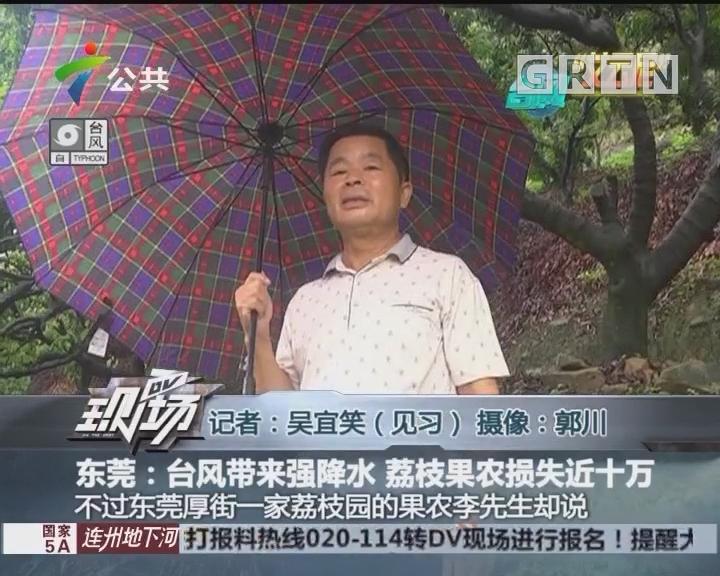 东莞:台风带来强降水 荔枝果农损失近十万