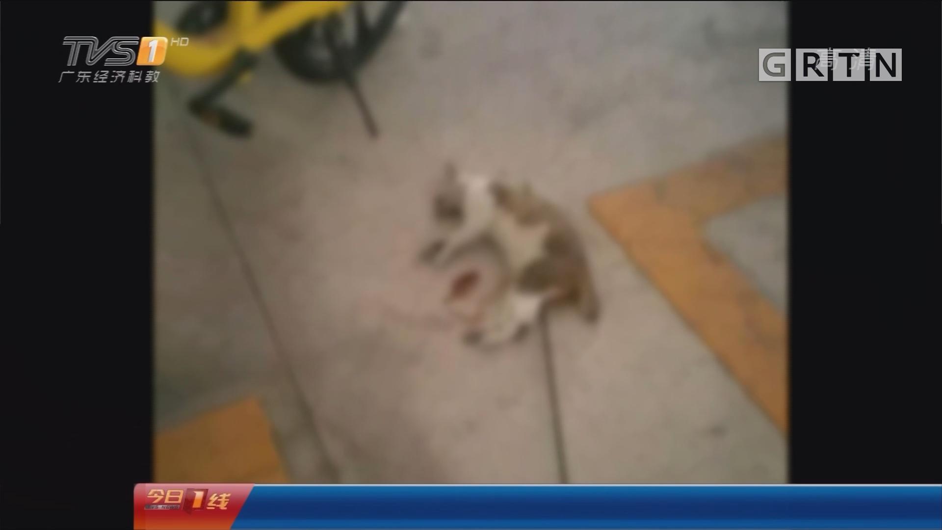 中山:小区流浪猫遭虐杀 神秘利箭从何来?