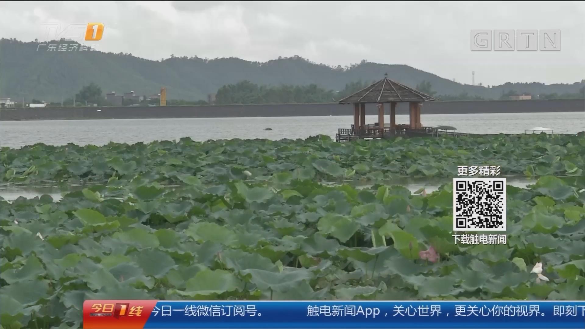 2018阳春荷花节:第二届阳春荷花节 七月七盛夏开幕
