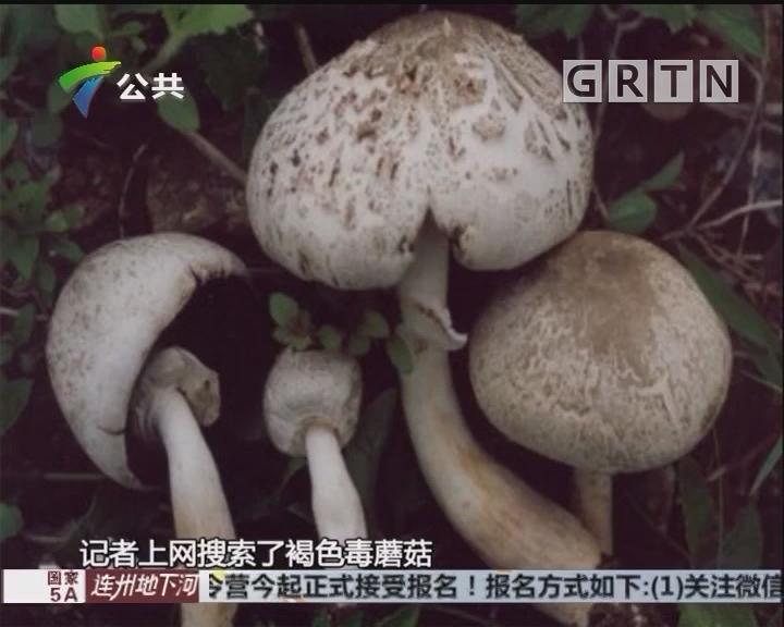 肇庆:婆孙误食毒蘑菇 双双入院抢救